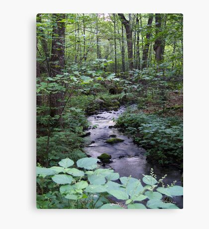 Quiet Brook in Gatineau Park Canvas Print