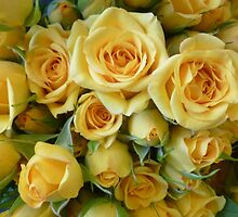 Sweet Baby-Yellow Roses by Elaine Bawden