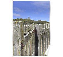 Fence and Gate, Port Arthur, Tasmania Poster