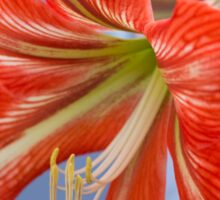 Tania's Happy Hippy plants - Hippeastrum Sticker