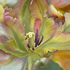 Petals by EbyArts