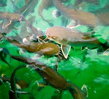 Catfish by Hans Christopher Hunter