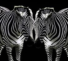 Zebra Twins by Darlene Lankford Honeycutt