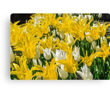 Rays of Spring Tulips Canvas Print