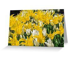 Rays of Spring Tulips Greeting Card