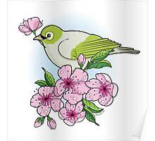 White-eye and sakura blossom Poster