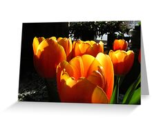 Dreaming of Spring......   Greeting Card