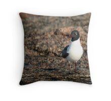 Seagull Stalker Throw Pillow