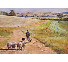 Moving the Rams (Whiteheads Creek) Photographic Print