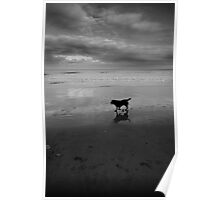 Beached Dog Poster