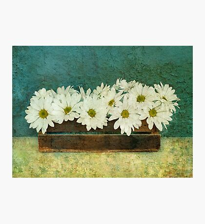 Spring Daisy Box Photographic Print