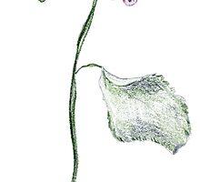 rose by ninamarie