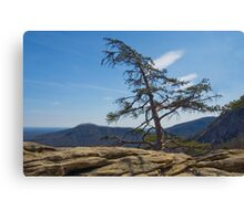 Lone Pine on Top of the Rock Canvas Print