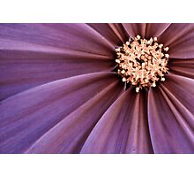 Hypnotized Photographic Print