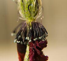 Poppy's Gone by Squealia