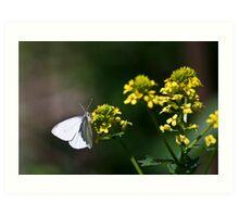 Flutter... Art Print