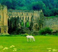 Ruins of Riveaulx Abbey by Nancy Barrett