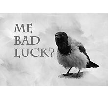 Me Bad Luck? Photographic Print