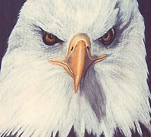 Bal Eagle face shot by Bridgitte  Flores