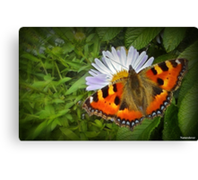 Spread Your Wings © Canvas Print