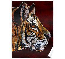 tiger portraite Poster