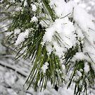 Pine Dusting by Ashley Kuhlman
