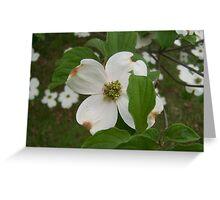 Flowering Dogwood Tree Greeting Card