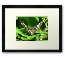 Spirit of The Blue Tiger Butterfly Framed Print