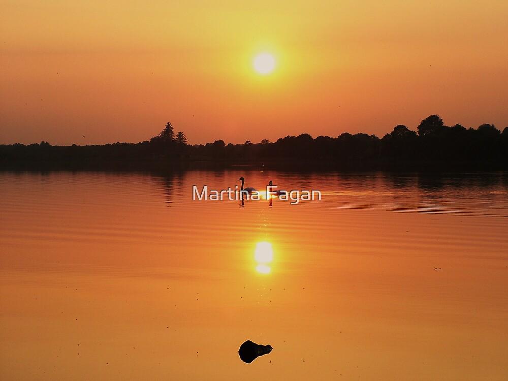Swans at Sunset  by Martina Fagan