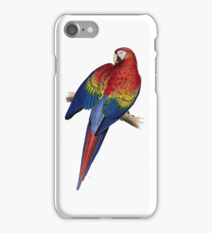 Illustration of A Scarlet Macaw Isolated On White iPhone Case/Skin