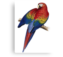 Illustration of A Scarlet Macaw Isolated On White Canvas Print