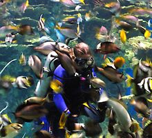 Swimming With The Fish by Misty Lackey