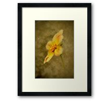 Summer's Golden Texture Framed Print