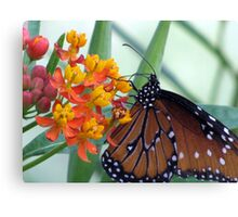 Butterfly ~ Fit for a Queen Canvas Print