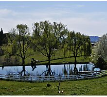 Weeping Willow Pond Photographic Print