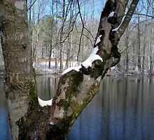 Tree Pond by Allison Floyd