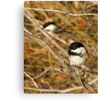 Black Capped Chickadees Canvas Print