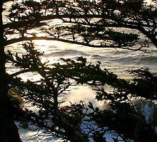 Cape Arago, Oregon by Matt Emrich