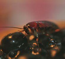 Cockroach Heaven  by Dennis Stewart