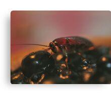 Cockroach Heaven  Canvas Print