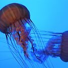 Red Jellyfish by Nupur Nag