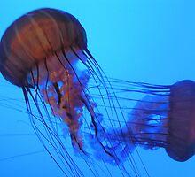 Red Jellyfish by Nupur Nag