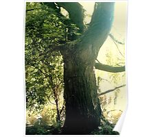 Wise Old Tree Poster