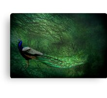Peacock Wood Canvas Print