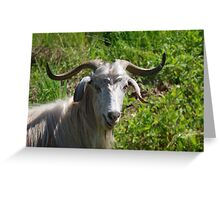 Portrait of A Horned Goat Grazing Greeting Card