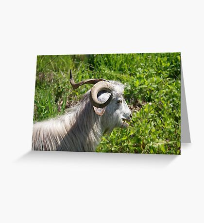 Side View of A Billy Goat Grazing Greeting Card