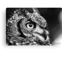 Intrigued #2 Canvas Print