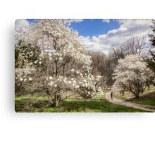 Magnolia Walk Canvas Print