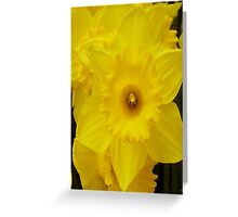 SPRINGTIME DAFFODIL Greeting Card