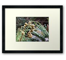 Hellyer Gorge Framed Print